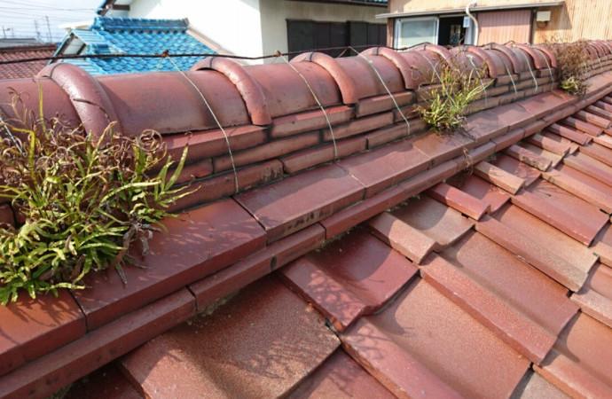 <p>屋根も雑草は生えています</p> <p>全てセンスで解決致します</p> <p>代表者建築士が営業も監督も全てして窓口は一つ</p> <p>お客様は楽ですよ~</p> <p>たらい回しはありません</p>